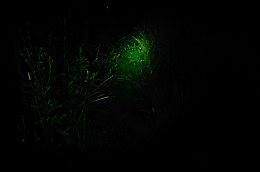 DSC_8463c