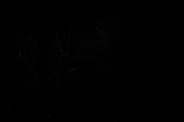 DSC_8468a