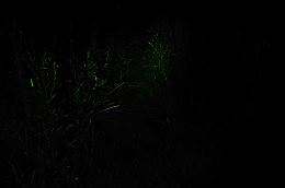 DSC_8469a